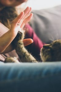 Cat and human touching hands